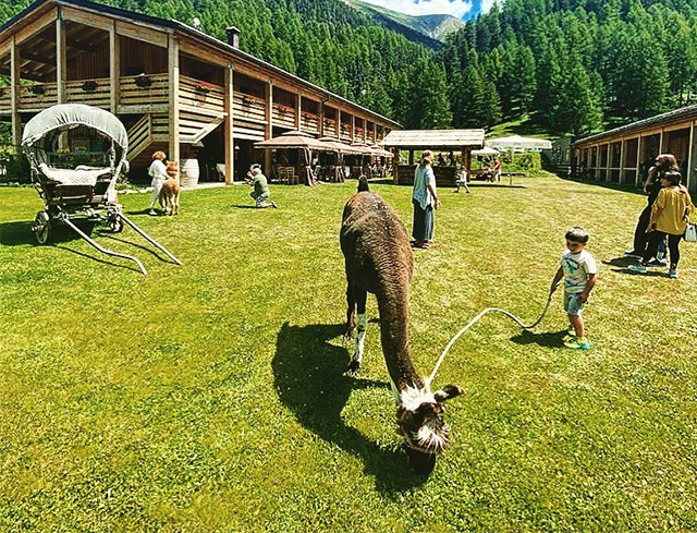 Livigno In Family WALKING WITH PONY OR LITTLE DONKEY