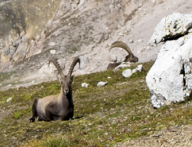 Livigno Family&Kids EXCURSION ON THE STELVIO NATIONAL PARK